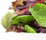 Mixed Greens with Classic Vinaigrette