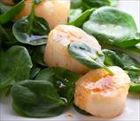Scallop & Arugula Salad